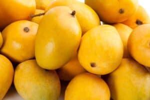 mango alphonso