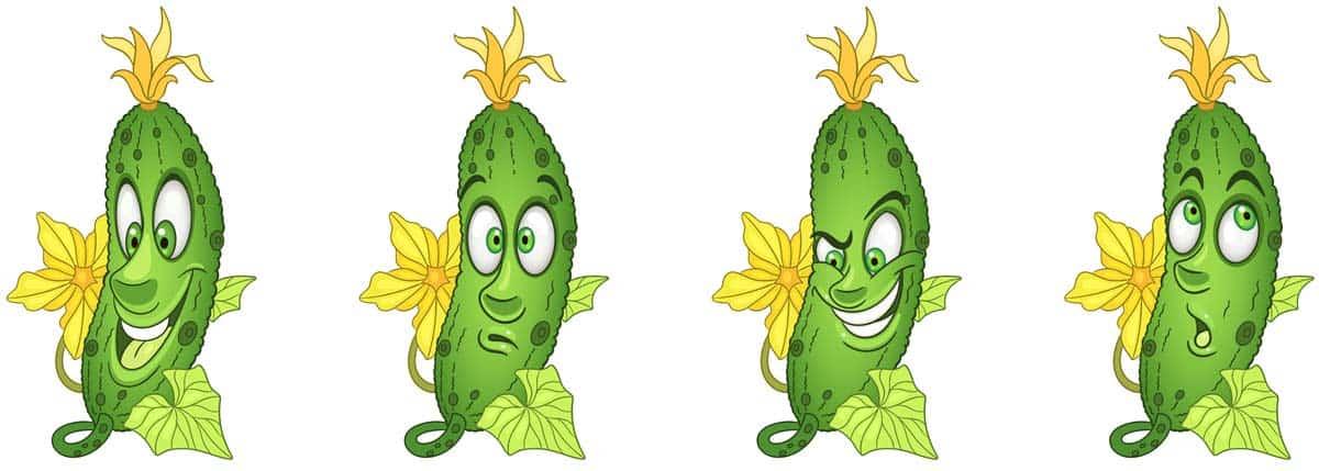 clasificacion de los pepinos