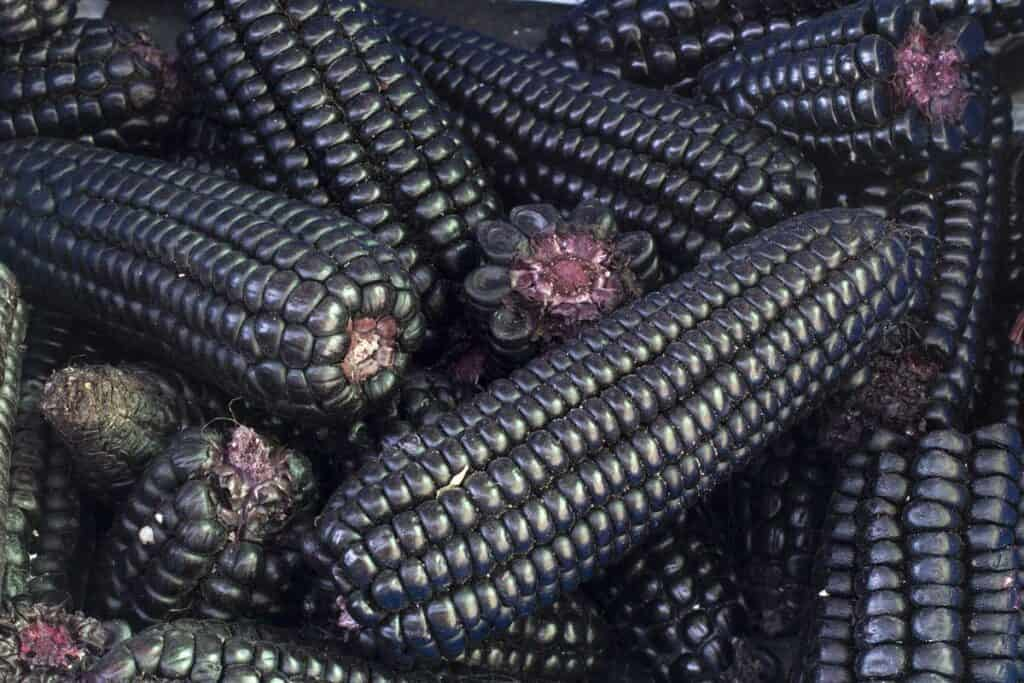 maiz morado
