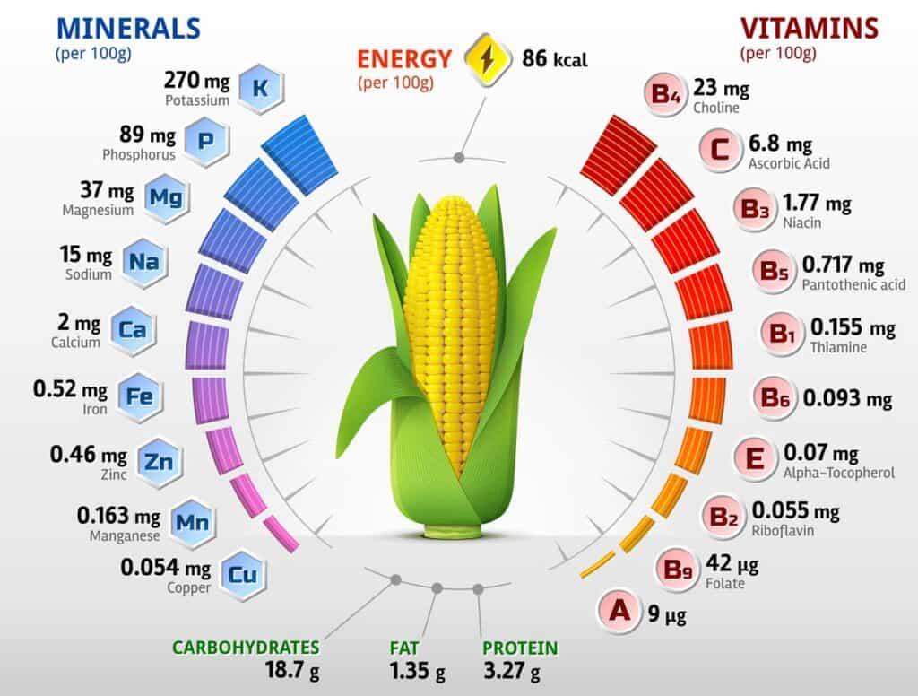 maiz propiedades